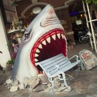 shark-bench-2