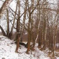 Лес под Тулой