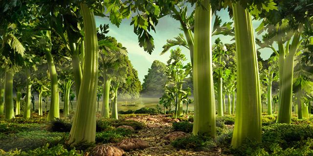 CeleryForest