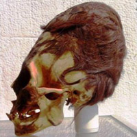 11elongated-skull-paracas