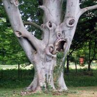 Дерево-убийца