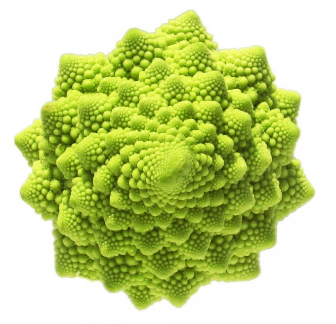 53411,xcitefun-veg-art-23