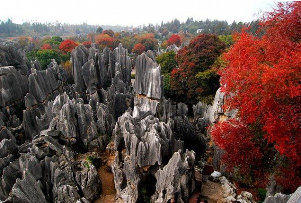 shilin-stone-forest-china-3