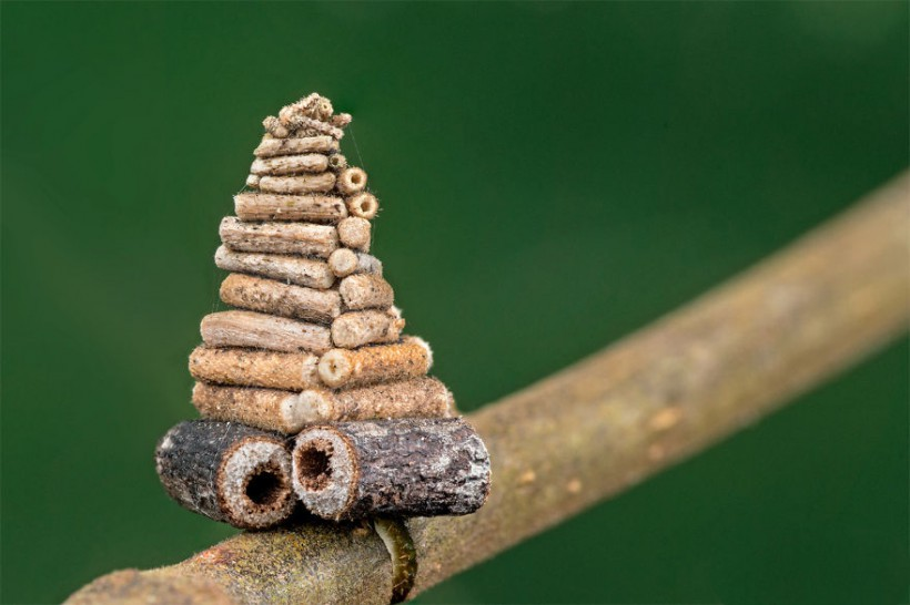 7-mysterious-structures-from-the-worlds-smallest-architects__880